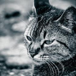 性格悪い猫