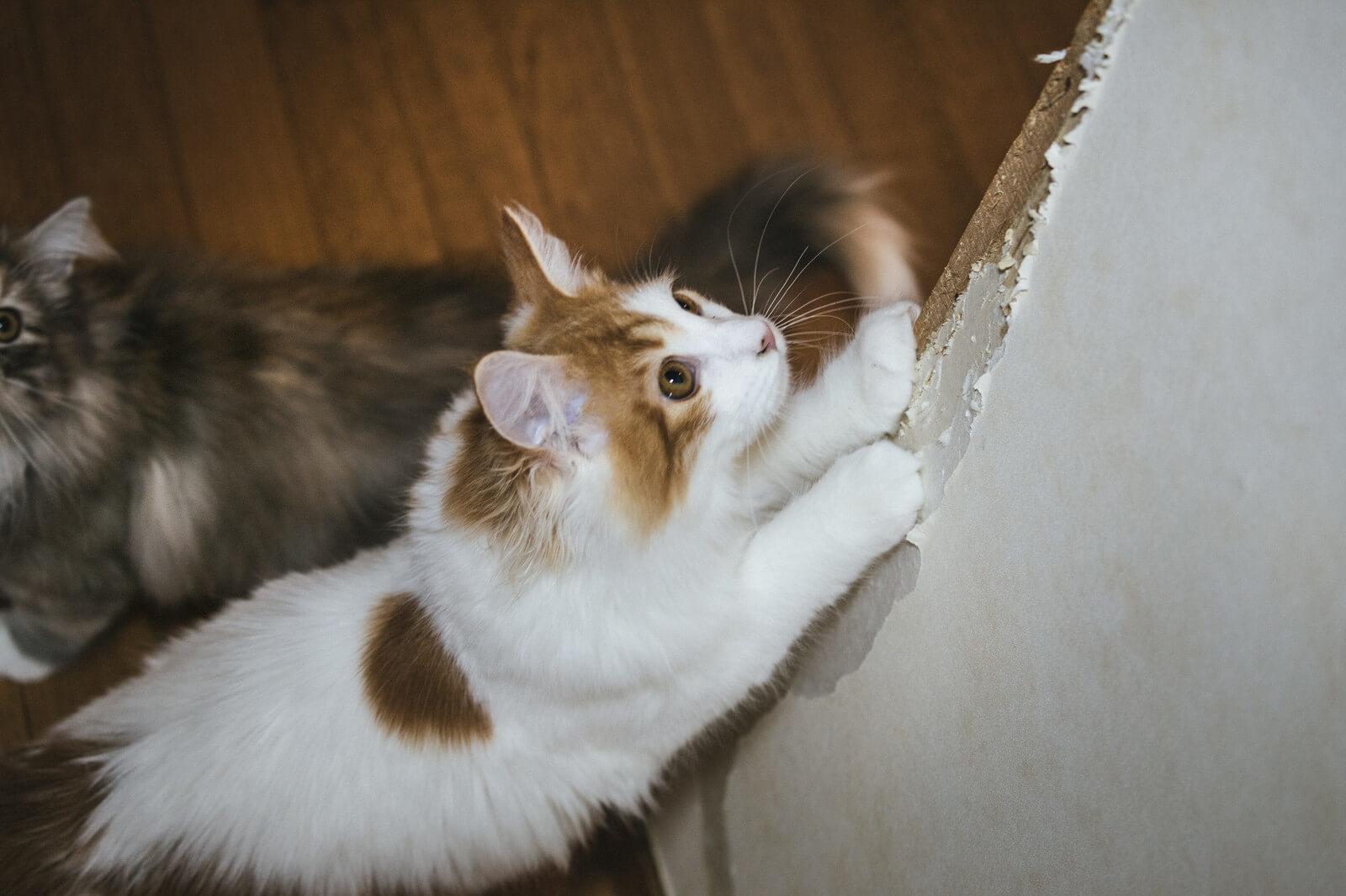【デュエルリンクス】分断の壁の対策を考えてみた!