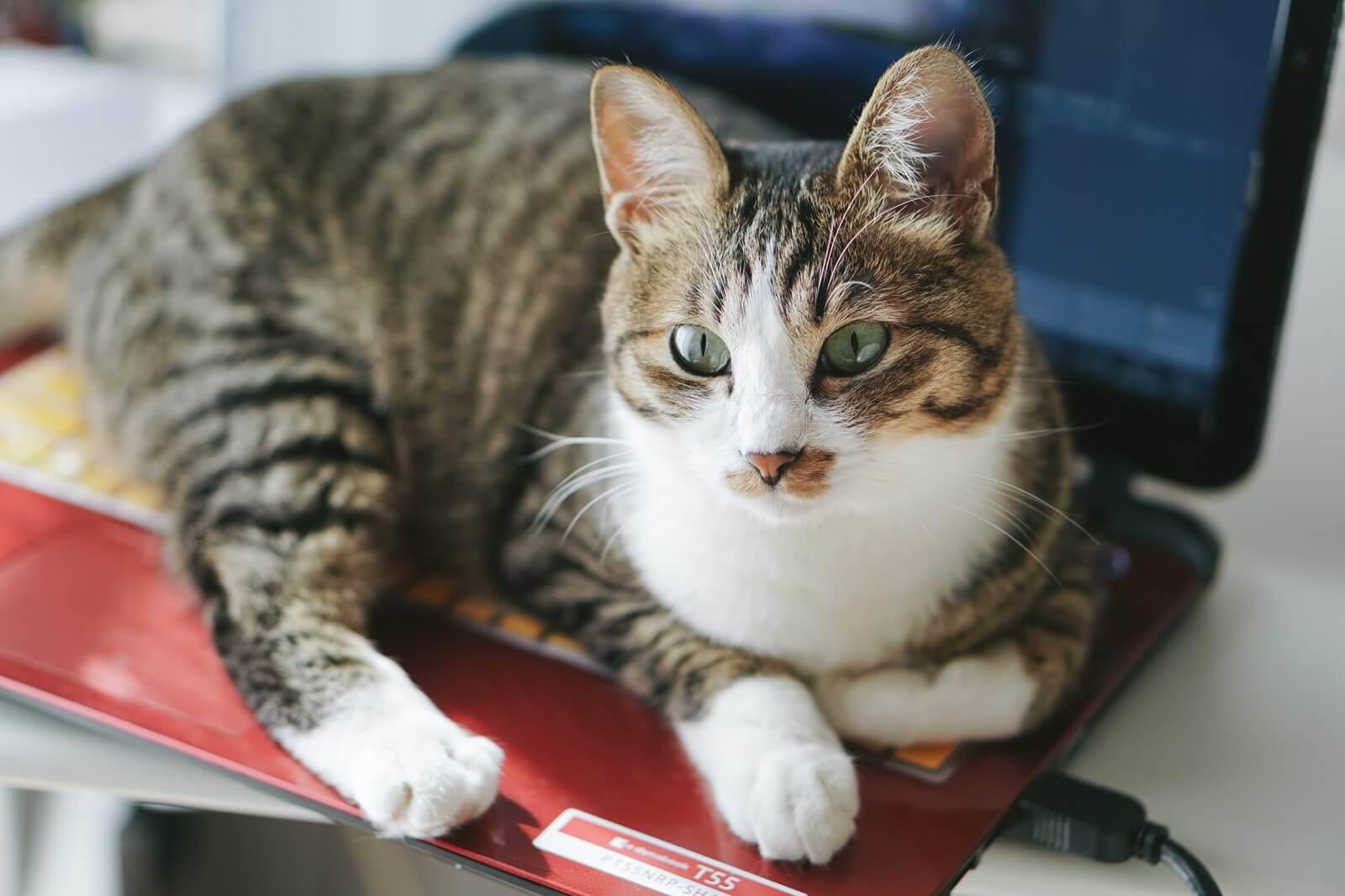 ゲーム配信を辞めるよう促す猫