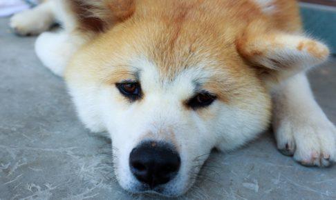 ゲーム実況に疲れた犬