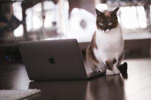 MacBookでPS4のリモートプレイをしようと考えてる猫