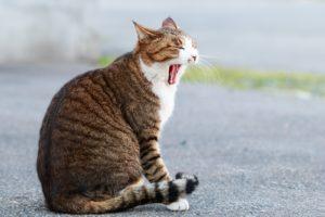 PS4のダウンロードが遅くてあくびが出る猫