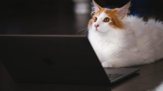 ゲーム実況中の猫