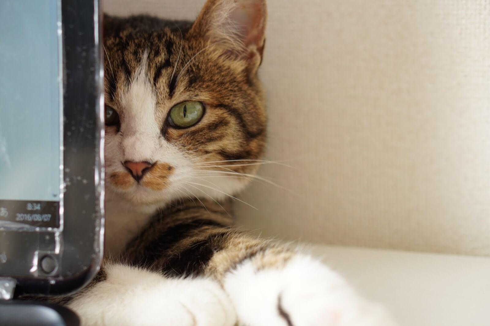PCの裏にいる猫