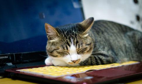 ゲーム実況を休んでる猫