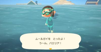 【あつ森】ムール貝の入手方法
