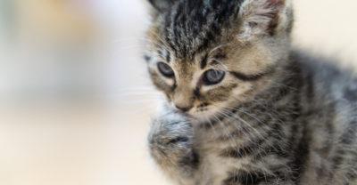 手汗を気にするネコ
